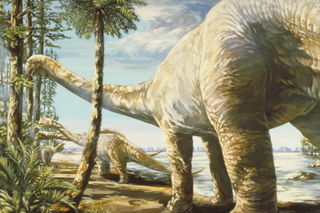 Texas dinosaur Pleurocoelus